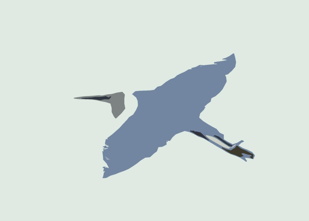 Little Egret 10